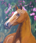 Wonderful horse portrait