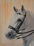 Lippizan horse with special bridle