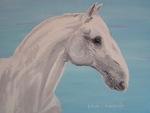 Lippizan horse portrait