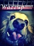 My Dog being goofy