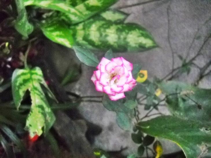 La mosca y la flor