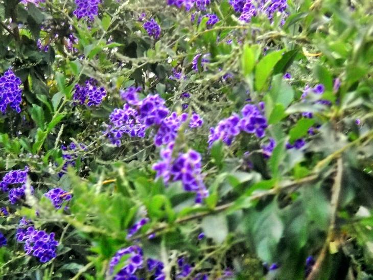 Violet4