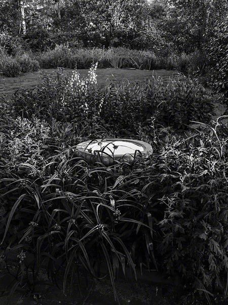 Fertile Garden