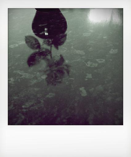 Polaroid_I