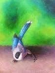 Spring Black-billed Magpie