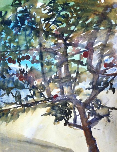 Apple tree at daytime