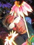 Thorn crowned Hippie fool