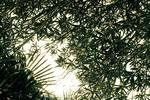 Plant serie 5