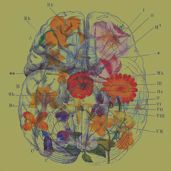 Brains and Flowers