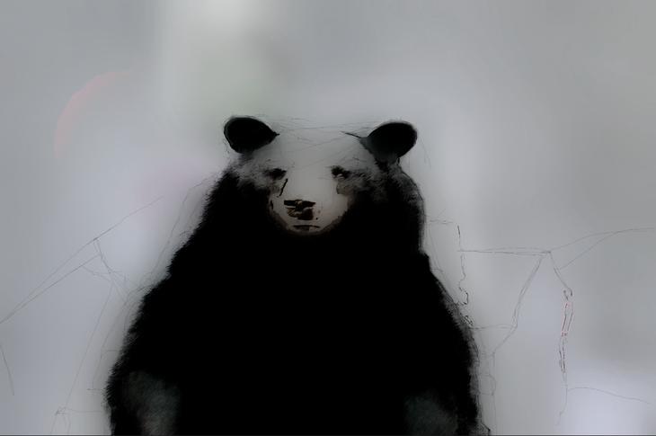 The Bear never sleep