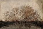 Árbol surgiendo / Emerging tree