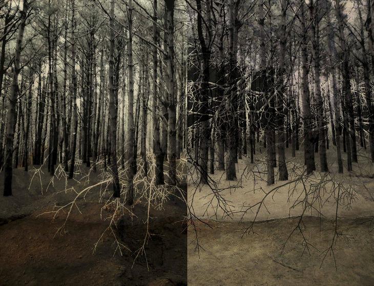 Bosque dividido I / Divided forest I