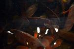 Fish Tank #3