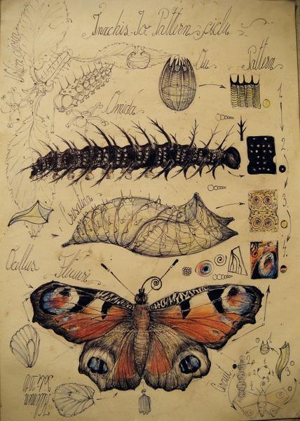 15  Animal pattern fluture ciclu