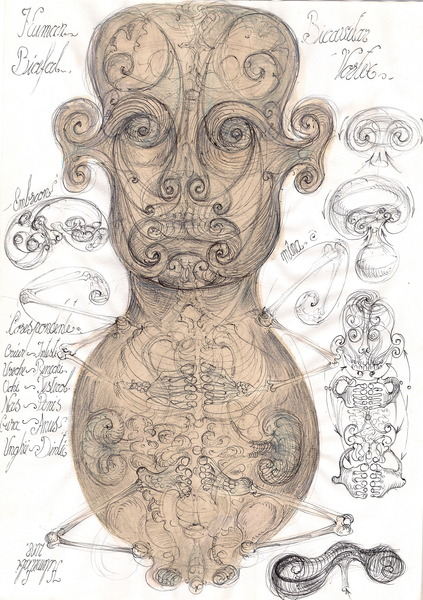 20 Human embrion corespondente simetrie bicefala organite