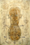 21 Human embrion corespondente simetrie bicefala fecundatia vort