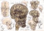 22 Human craniu vortex sfera embrion anatomia pattern