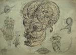 26 Human craniu  ochi ureche nana molar vortex sfera embrion ana