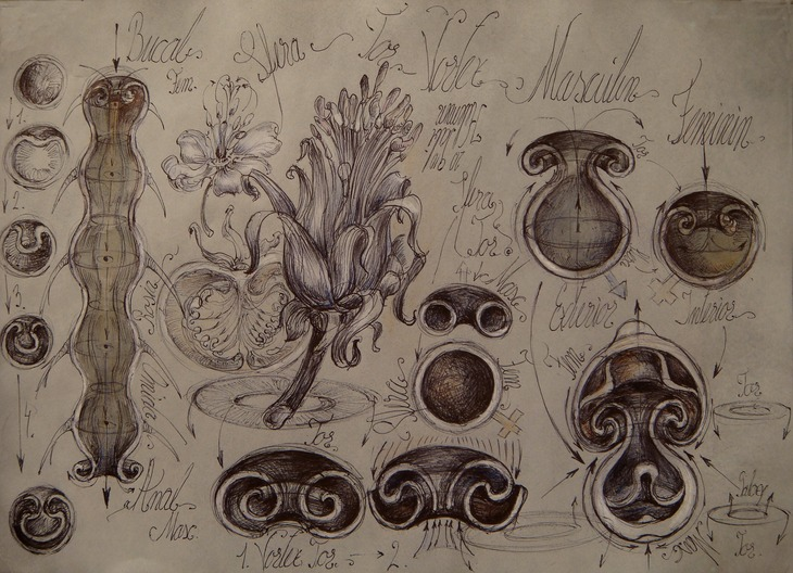 29 Vegetal animal tubular vortex Interior-exterior sfera  anatom