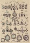 67 Algoritm computational  diagrama simplu -complex armonic-cosm