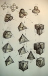 72 Algoritm computational  diagrama morfogeneza bidirectionala 4