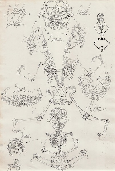 84  Algoritm computational  diagrama anatomica Om-cavitati-crani
