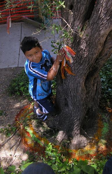 Wishing tree Lincoln