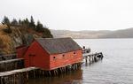 Newfoundland VI