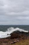Newfoundland X
