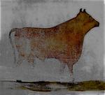 Koe van Janne