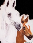 "Zabu Stewart - ""Horses"""