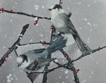 Winter Grey Jays