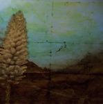 Californian Yucca