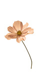 Flower - 003