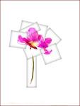 Flower - 005