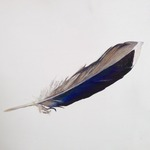 Blue Feather from Rockaway