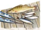 Fisch, buten und binnen