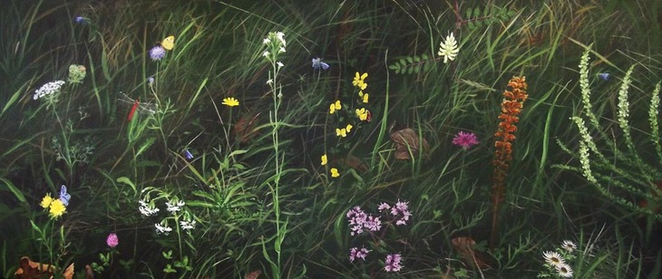 Planter i Holtug kridtbrud