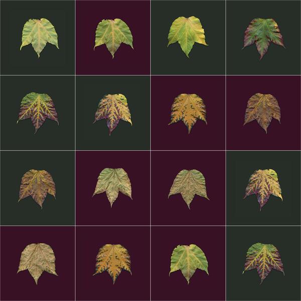 Blaetterblatt1 / leaves pages