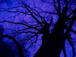 Tree 02