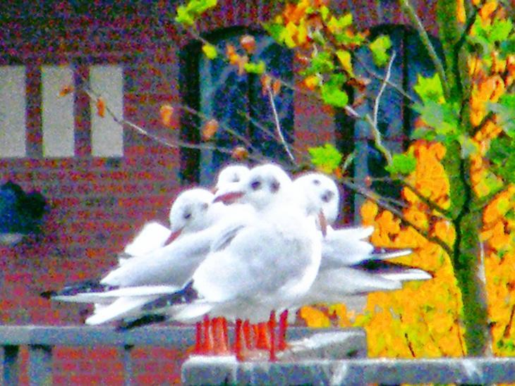 Ein Haufen Möwen - A Bunch of Seagulls