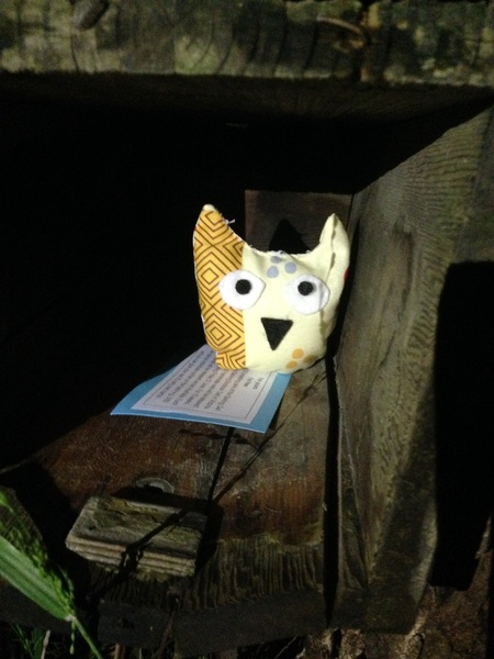 Travelling Owl Project - released into the wild