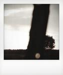 Polaroid_6