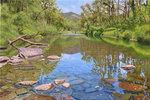 Canungra Creek