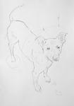 Pablo der Atelierhund