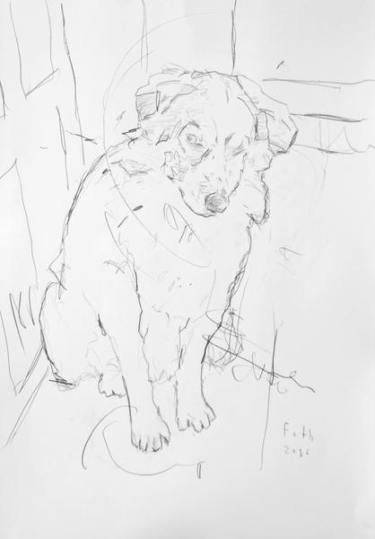 Hund Lucky