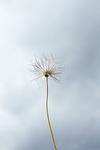 FT_FLOWERS_042