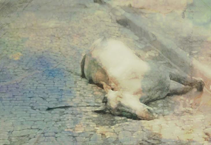 Death of Bella