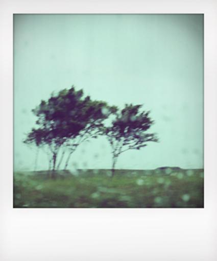 Polaroid_8