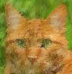 An Orange Cat 1